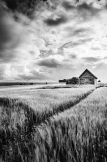 salisbury-plain