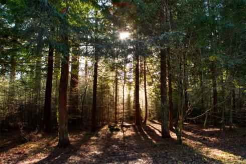 heavens-gate-sun-throughh-trees