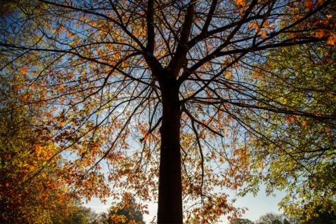 tree-v-icky-park